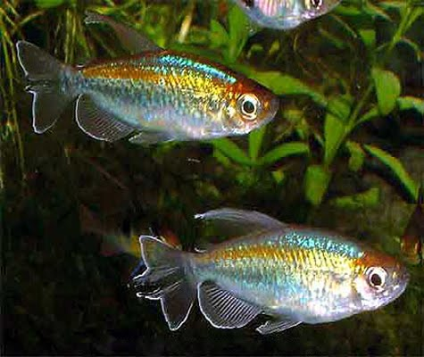 Petland Aquatics All The Fish On This Page Are Available