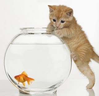 Petland Aquatics Tips on Keeping Goldfish in a Bowl