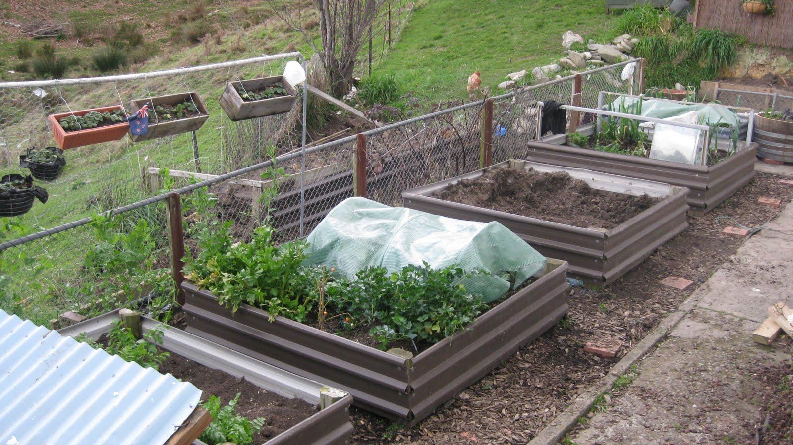New Zealand Vegetable Garden First Day