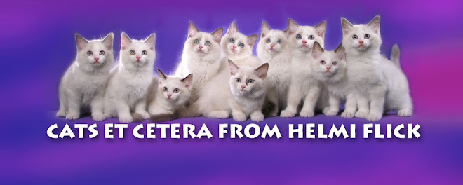 Cats et cetera from Helmi Flick