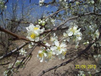 Primavera en la finca