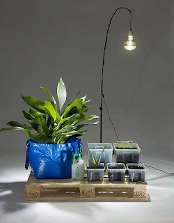 gardening at night hacking ikea aloe vera and other. Black Bedroom Furniture Sets. Home Design Ideas