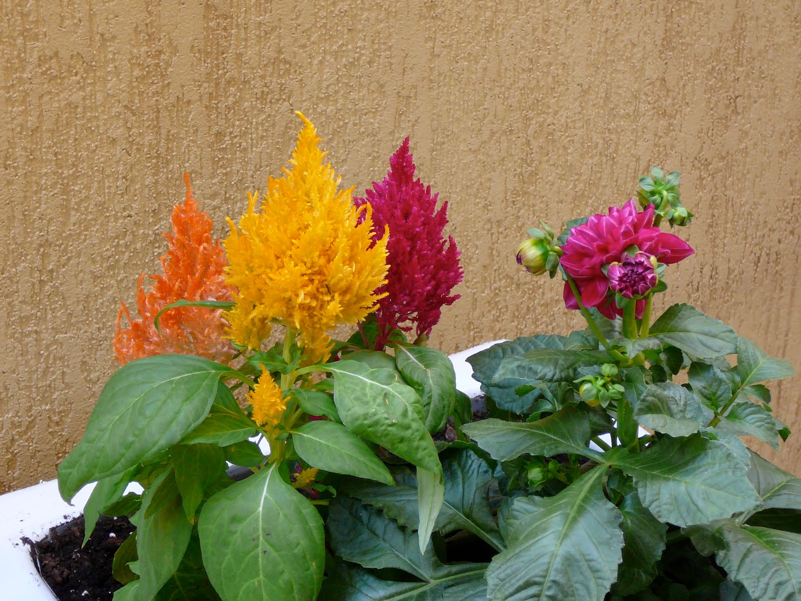 Plantas de exterior que aguanten el sol interesting - Plantas de sol directo ...