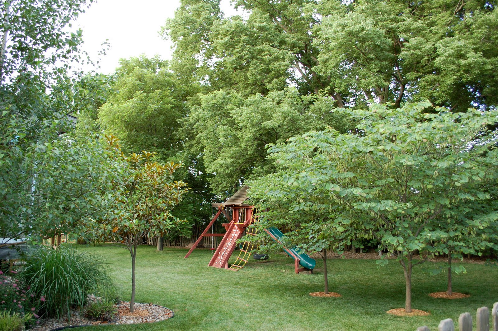 Backyard Trees For Privacy : The awesome back yardI loved those trees and privacy