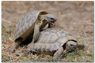 Bio sfera gennaio 2011 for Deposizione uova tartarughe terrestri