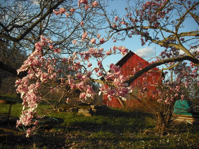 Spring on the Farm
