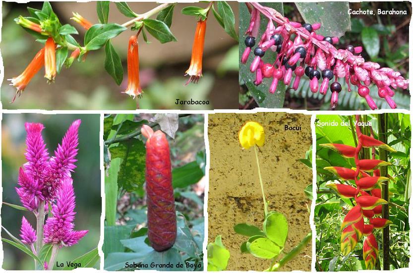 Ver Imagenes De Flores Raras - Después De Ver Estas Fotos, Nunca Más Volveré A Mirar
