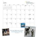 2010 Western Border Collie Calendars