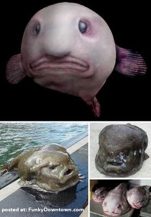 really ugly animals. of really ugly animals.