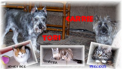 ***** My Foster Family *****