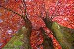 TREE PICS