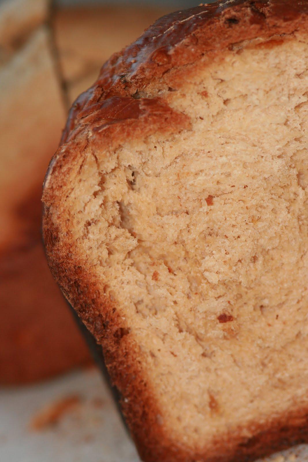 vin de pissenlit destination le portugal avec un pain traditionnel sucr. Black Bedroom Furniture Sets. Home Design Ideas