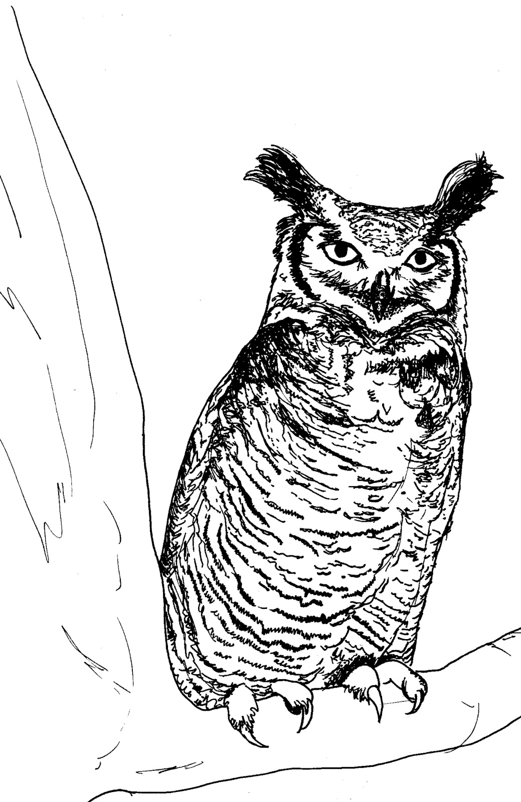 Great Grey Owl Coloring Pages