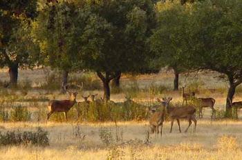 Saiba tudo para tirar carta de caçador em ESPANHA