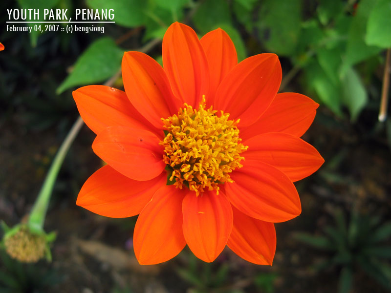 Frozen fate municipal youth park penang a few more flowers mightylinksfo