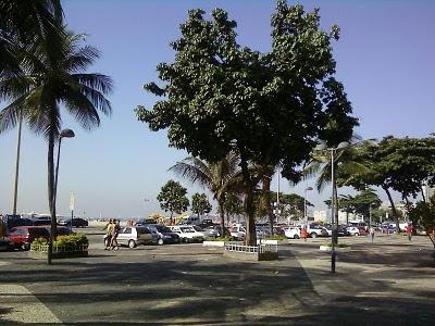 Plantas de interior : Pachira aquatica em Copacabana