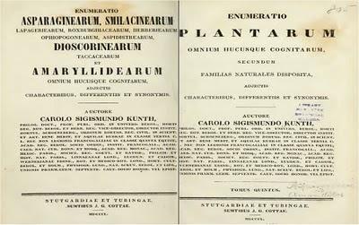 Plantas de interior - Enumeratio plantarum