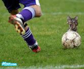 football..