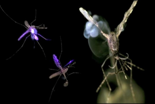 Convergence Online and Information Technology blog Mosquito Laser