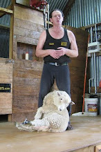 How to Shear a Sheep, NZ-style