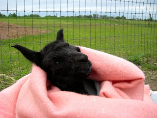 Napping in a blankie