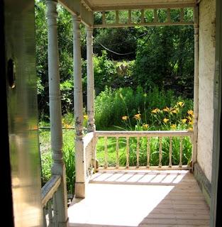 Sunlit daylilies