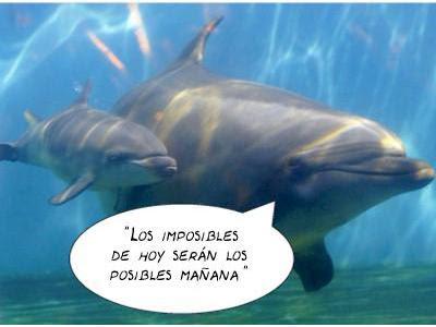 Delfines homosexuales - EL MUNDO
