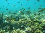 Los arrecifes de coral son semejantes a las ciudades