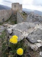 Una flor para los caidos