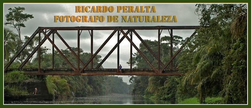Ricardo Peralta. Fotgrafo de Naturaleza