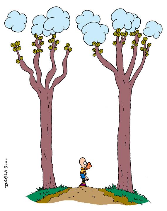 El jard n de douglas estos rboles tan altos for Arboles altos para jardin