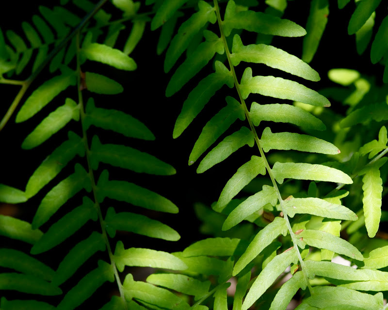 Photo of a green fern