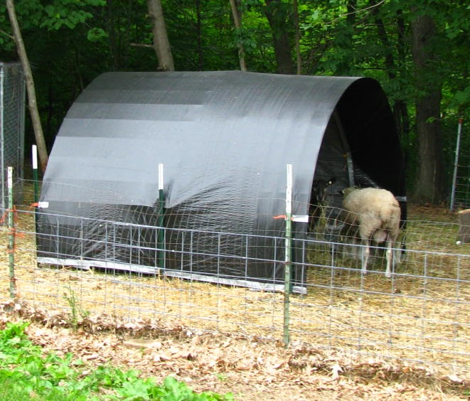 Shelter Panel W : River oaks farm studio cattle panel t post sheep shelters