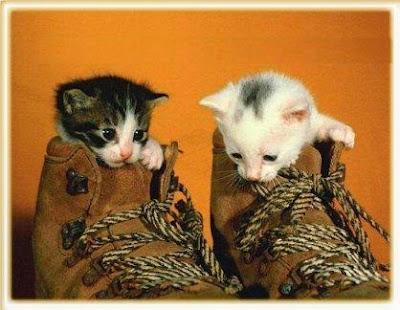 tiernas+gatitos