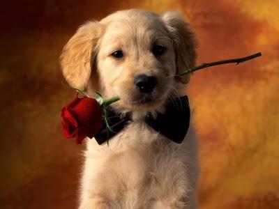 perro+cachorro+poemas+dia+animal+mascota+perro+gato