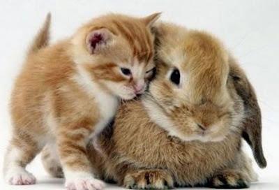 amistad amigos