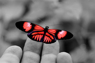 mano+mariposa+primavera