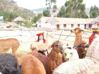 Girl with baby llama at C'corao