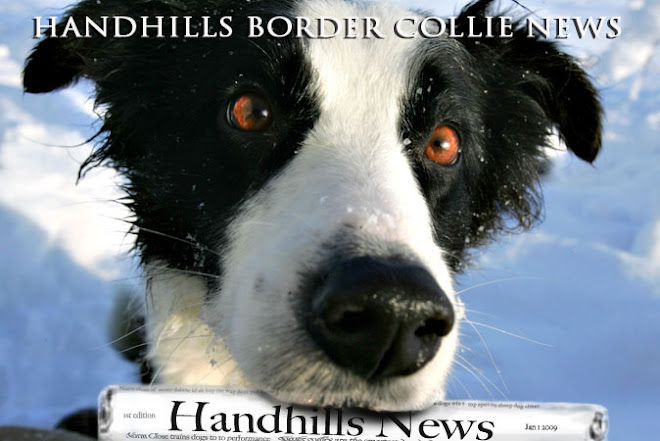 Handhills Border Collie News