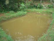 My Farm 2