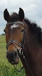 Våra underbara hästar