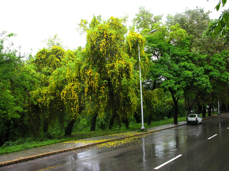 2398297214 3fa78f026e o - Raining In ISLAMABAd beautiful Images
