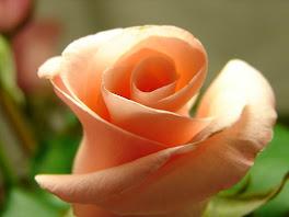 Uma rosa para Nossa Senhora