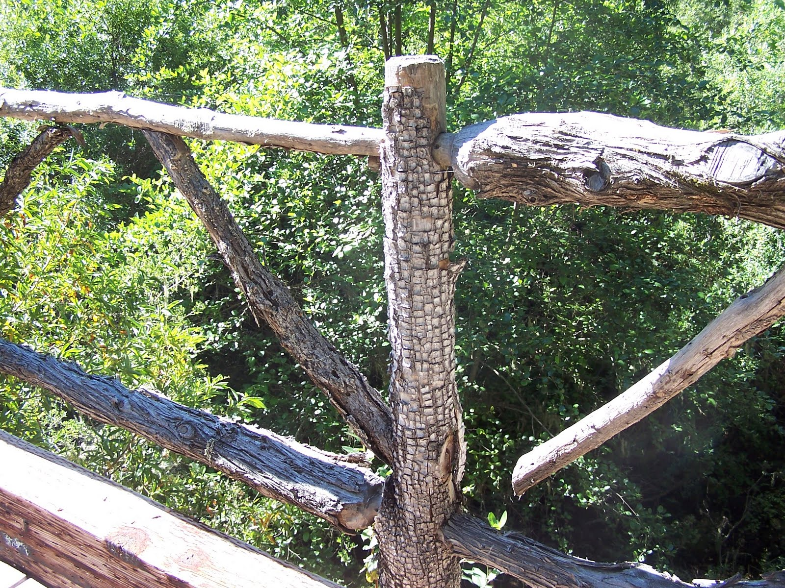 gopher-wood construction