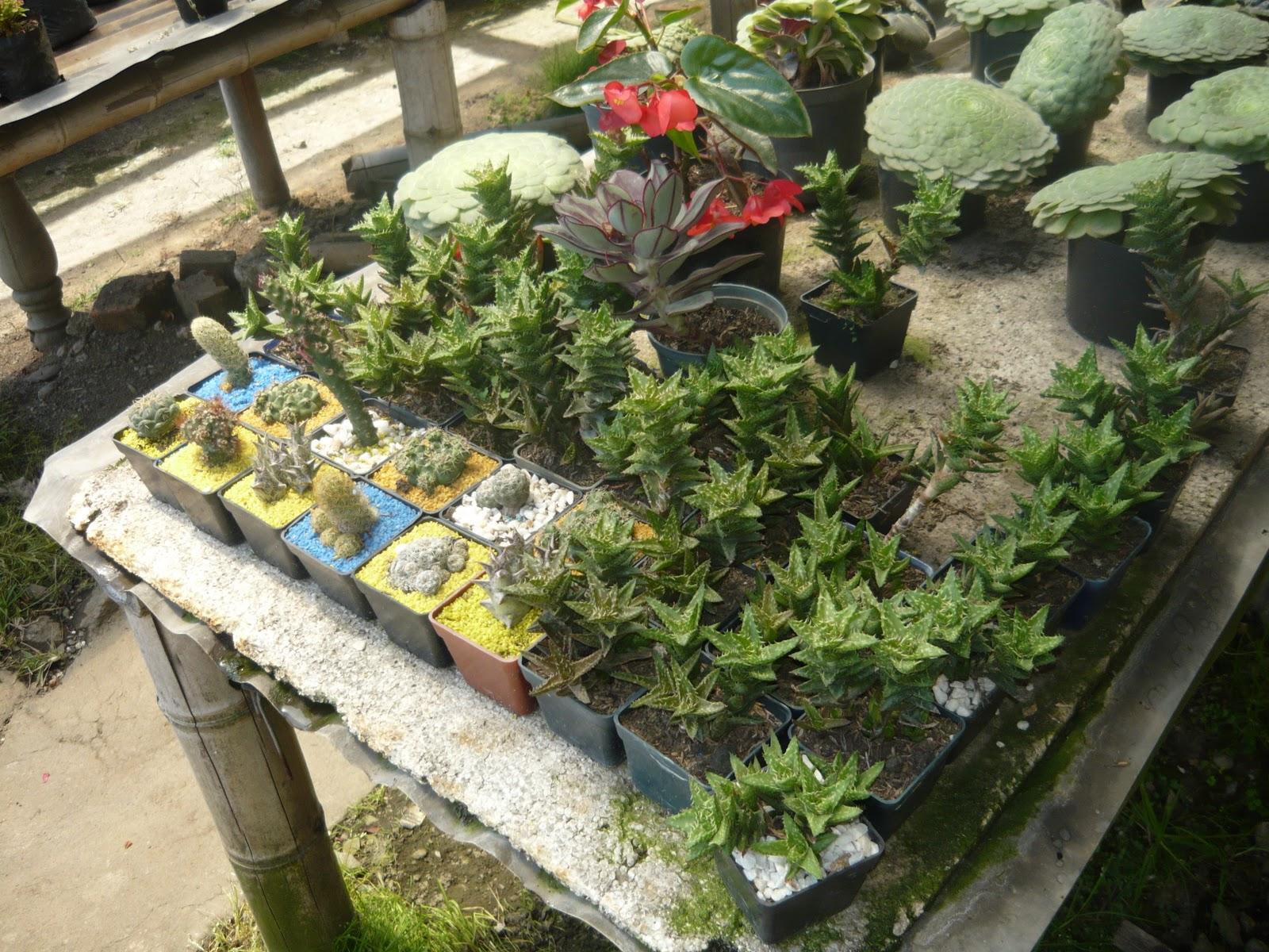 Vivero centro artesanal de colombia for Viveros forestales en colombia