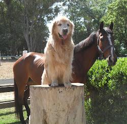 Por Amor a Perros y Caballos
