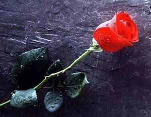 Uma rosa para ti, meu amor. Ilumina o meu caminho e serei o mais feliz.