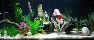 Mon aquarium de 54 litres 20G+-+