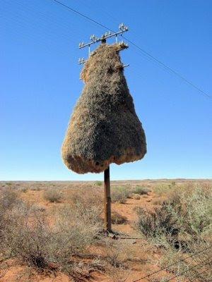usually find birds nest!