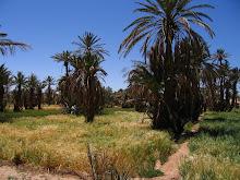 Blé et palmiers